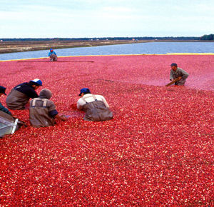 Gavin P. Smith - Operations Design Analysis: National Cranberry