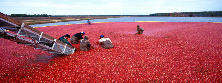 Operations Design Analysis: National Cranberry